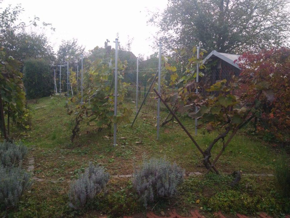 Isometall - zemné vruty - opora pre vinič